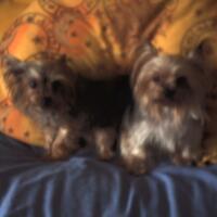 2001-05-16-goldenprincess.jpg